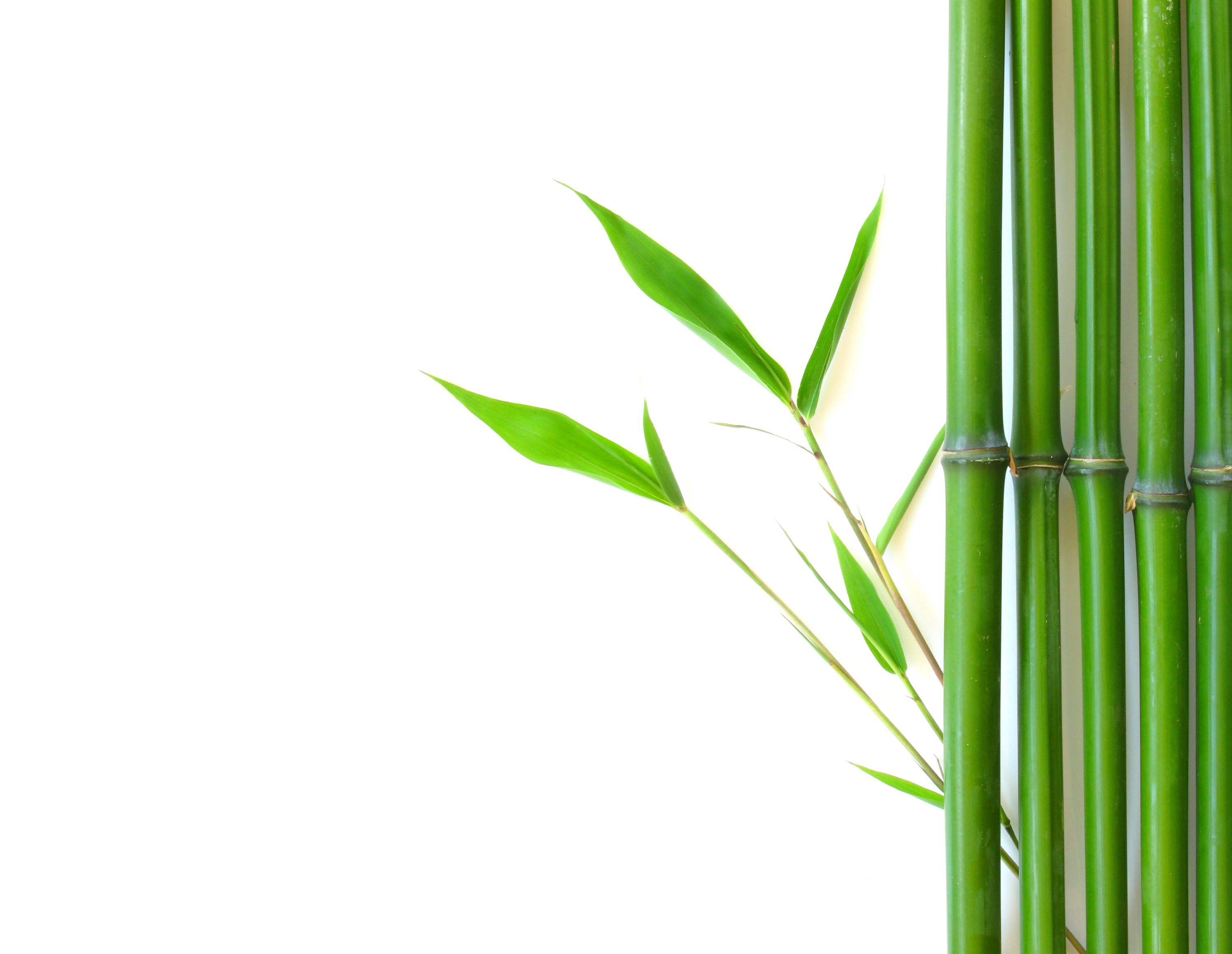 Bamboo Plant Images Free Clip Art